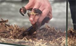 pub nrj mobile sony xperia z insectes vignette head